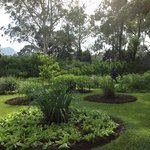 """letuce & herb garden. treated with """"waterguard"""""""