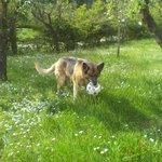 Indira nel parco della Domus