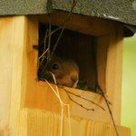 Unusual bird box resident