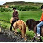 Keine Angst! Reiten auf diesen Pferden ist nicht schwer.