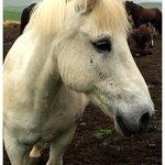 Katla, die sehr aufmerksame Ponydame.