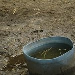 Would you want to drink filthy water? This can lead to health issues for the animals. They say i