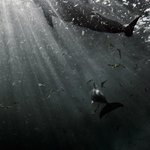 vasca dei delfini
