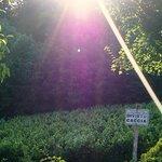 Sun setting on the vineyards.