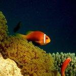 Vilamendhoo reef by jana-majk.com