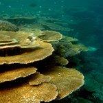 Vilamendhoo reef by jana.majk.com