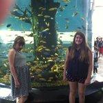 Fish fish and more fish