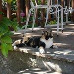 Terrace Kitty