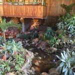 fish pond again