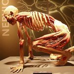 Exhibits include human bodies and more than 180 individual human organs and body parts preserved