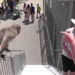 Toni's Zoo