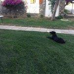 дикие собаки на территории отеля
