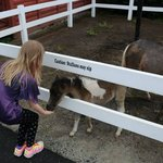 feeding a baby miniature horse