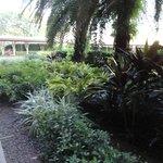 Jardim do térreo