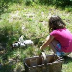 FREE fairy house building in the meadow- Mondays at 10am