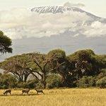 Mt Kilimanjaro from Amboseli NP