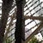 Pillars of WTC