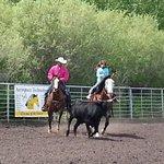 corraling a steer