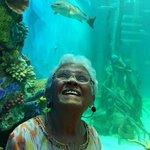 Mother dear enjoys tank