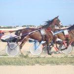 trotting races