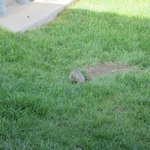 Ground squirrels outside cabin