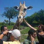 Serengeti safari, around $30- $40 extra