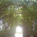trees archway