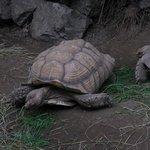 Big tortoises