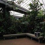Victoria Butterfly Gardens interior