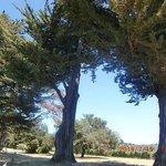 ワイナリー内にある大きな木