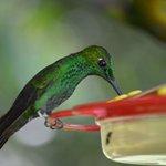 Hummingbird Feeders--definite highlight