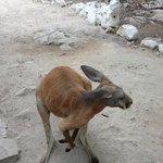 Walk in zoo had hopping kangaroos!  Very friendly too!