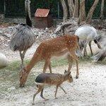 The walk in zoo had lots of room!
