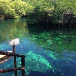 Fabulous cenote for swimming!