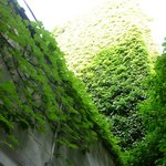 look up! the green walls of the courtyard