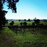 Canberra Region Premium Tours