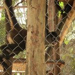 Spider Monkey at The Jungle Place