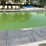 Pool closed due to algae