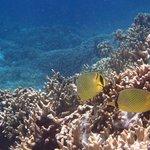snorkelling at Menjaran Island