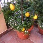 Hotel lemons