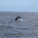 Saut d'un dauphin