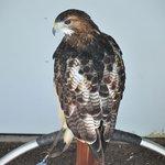 bird of prey center 2