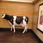 love the cow by the elevators!