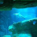 uno degli squali