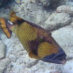 Чудесный риф и снорклинг