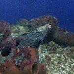 Moray eel