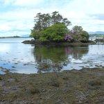 Island at Dereen Gardens