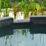 The new ecological pool 1