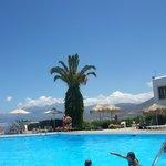 La piscine et son palmier