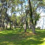 Sicht aus dem Schlaff und Tageszimmer Pinienwald